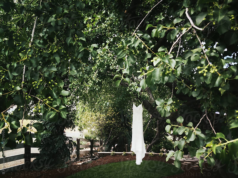 Wedding dress hanging from green trees by B. Harvey for Stocksy United