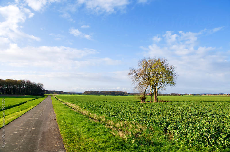 Field with road and tree by Harald Walker for Stocksy United