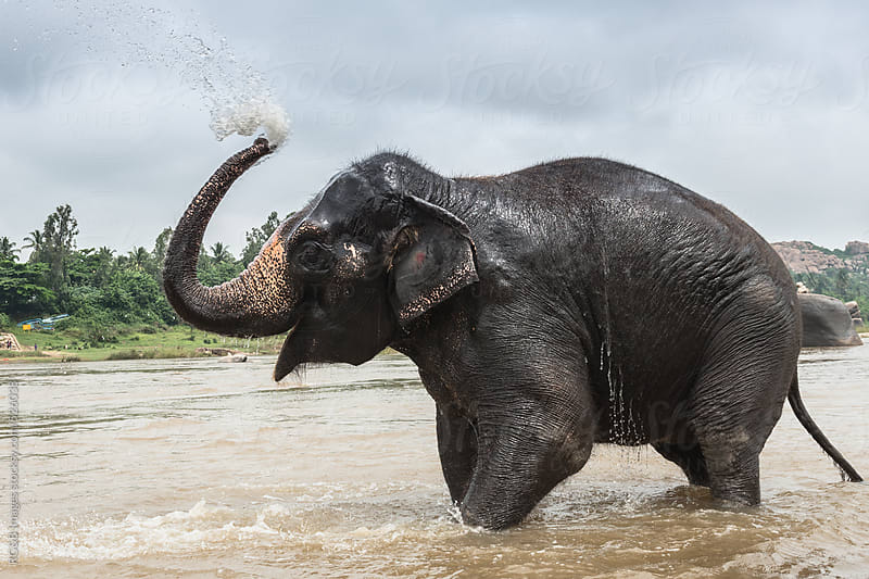 elephant showering in the river by RG&B Images for Stocksy United