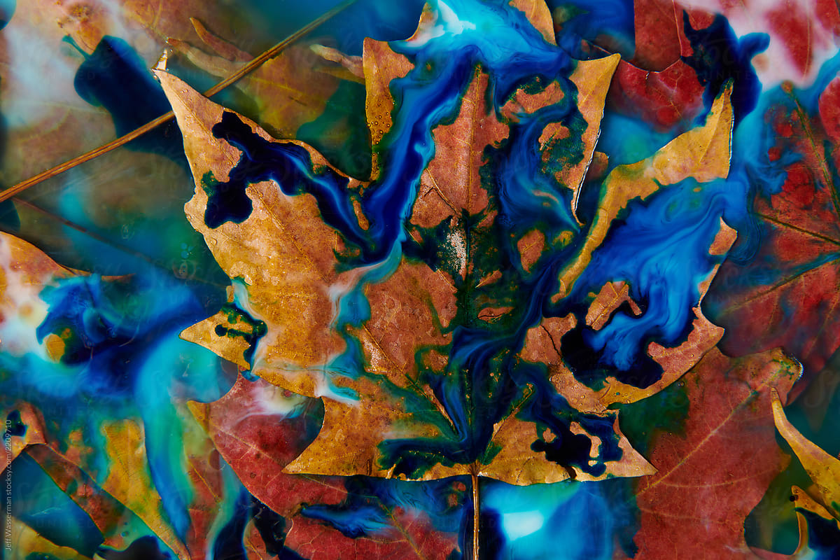 Fall Leaves Abstract by Jeff Wasserman - Leaf, Abstract - Stocksy United