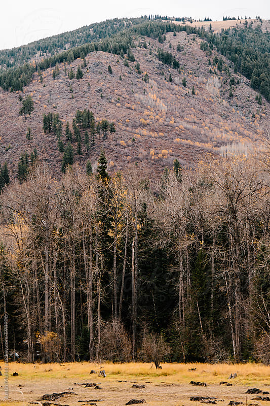Steep rugged mountain side in the fall.  by Justin Mullet for Stocksy United