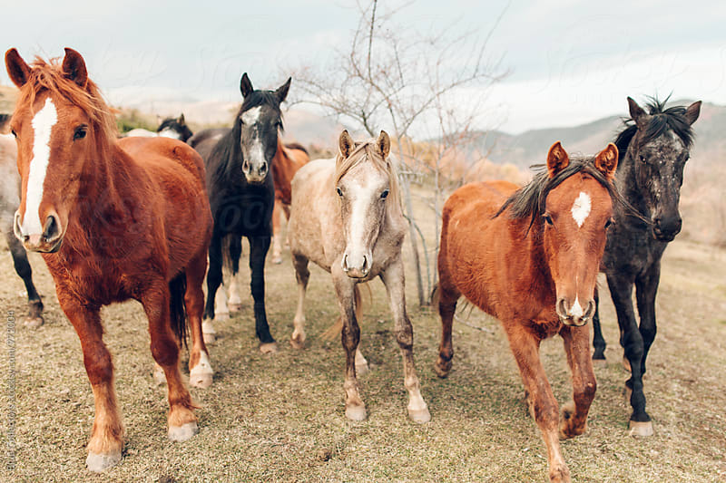 close up of a Group of wild Horses playing by Jordi Rulló for Stocksy United