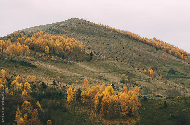 Mountain with beech trees in autumn and cabin trough trees by Cosma Andrei for Stocksy United
