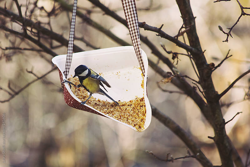 Feeding wild bird with chopped hazelnuts by Laura Stolfi for Stocksy United
