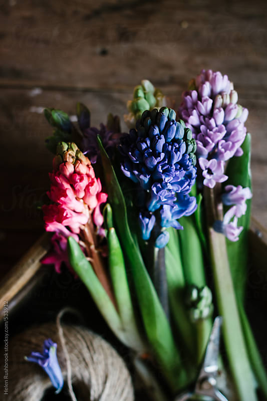 Spring flowers in a wooden crate by Helen Rushbrook for Stocksy United
