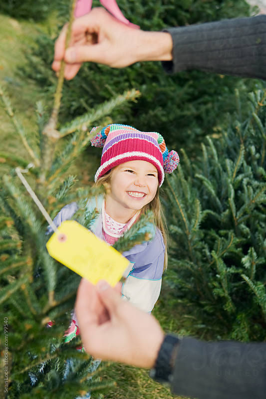 Tree Lot: Girl Trying To Get Parent To Buy Christmas Tree by Sean Locke for Stocksy United