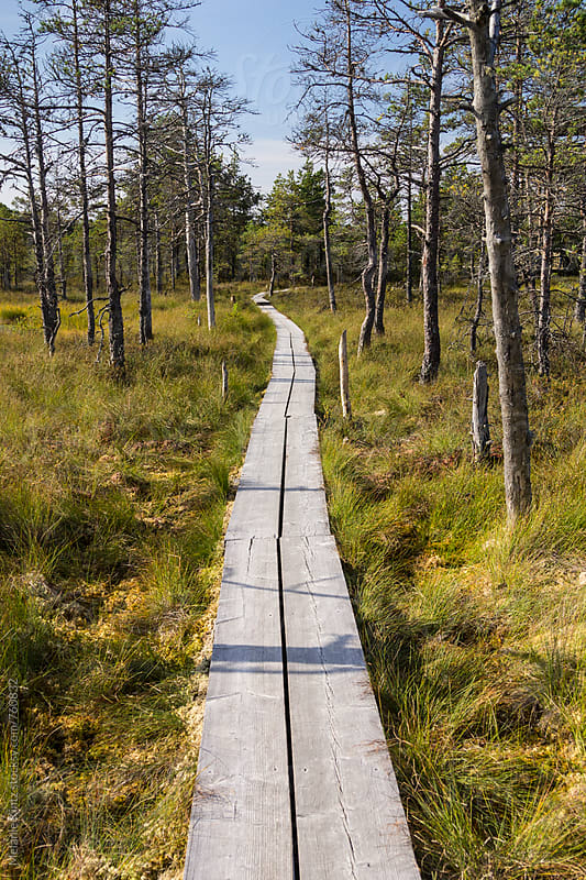 Wooden path through the Viru Raba bog, Lahemaa National Park, Estonia by Melanie Kintz for Stocksy United