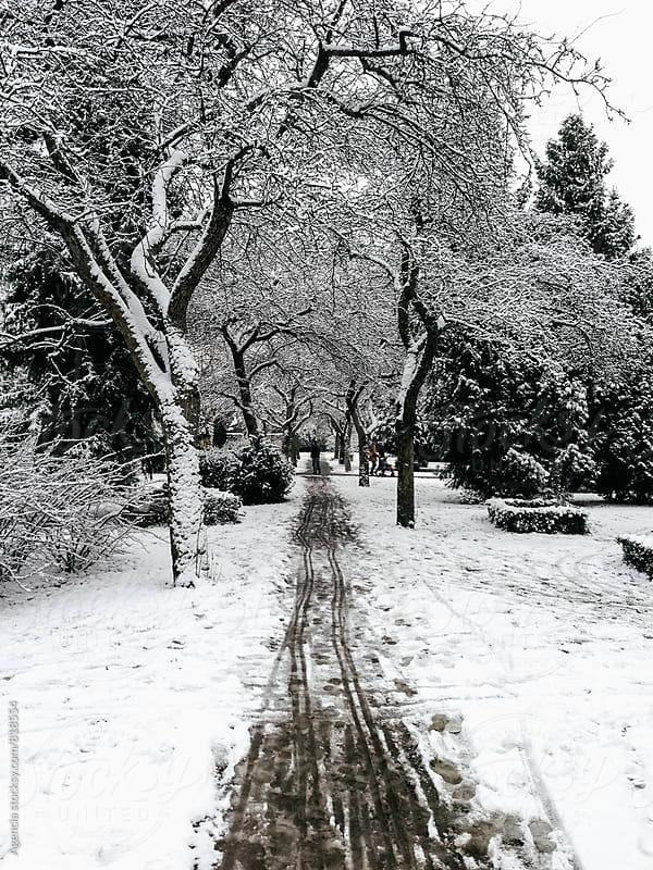 Snowy Path by Agencia for Stocksy United