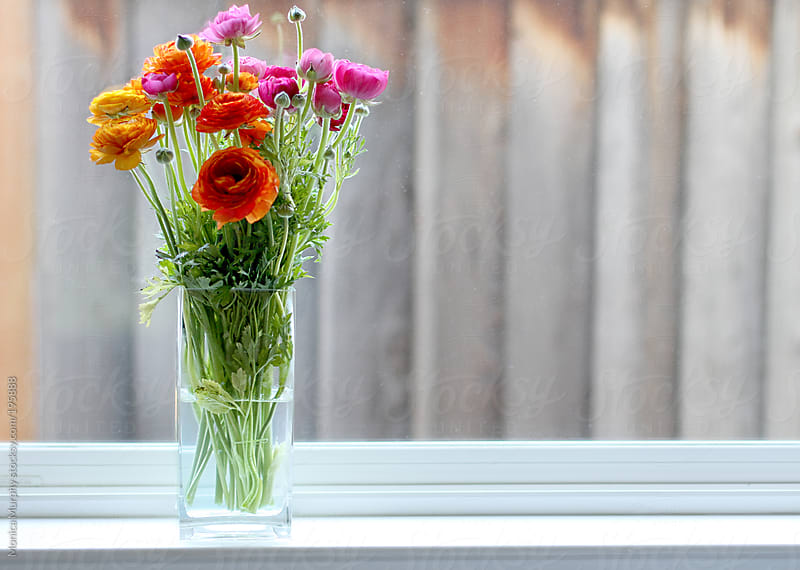 Colorful flowers in vase sitting on a window ledge by Monica Murphy for Stocksy United