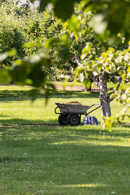 Wheelbarrow and shovel under apple trees by Melanie Kintz for Stocksy United