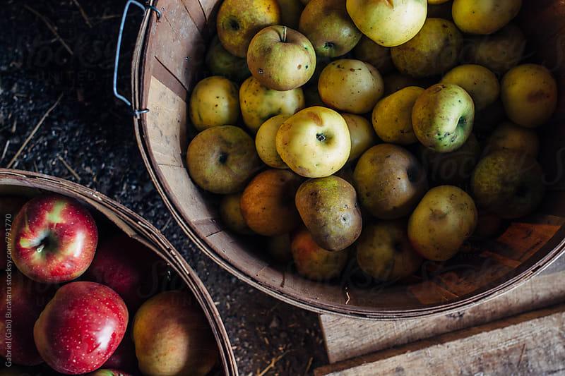 Various heirloom apples in baskets by Gabriel (Gabi) Bucataru for Stocksy United