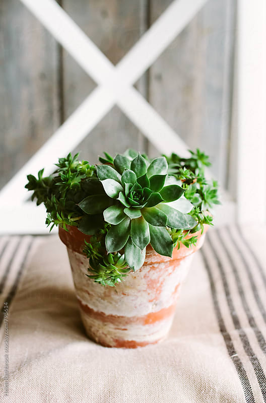 A succulent in an old pot on a chair. by Helen Rushbrook for Stocksy United