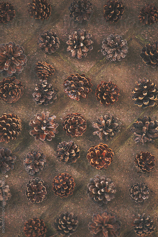 Overhead of pine cones in order. by BONNINSTUDIO for Stocksy United