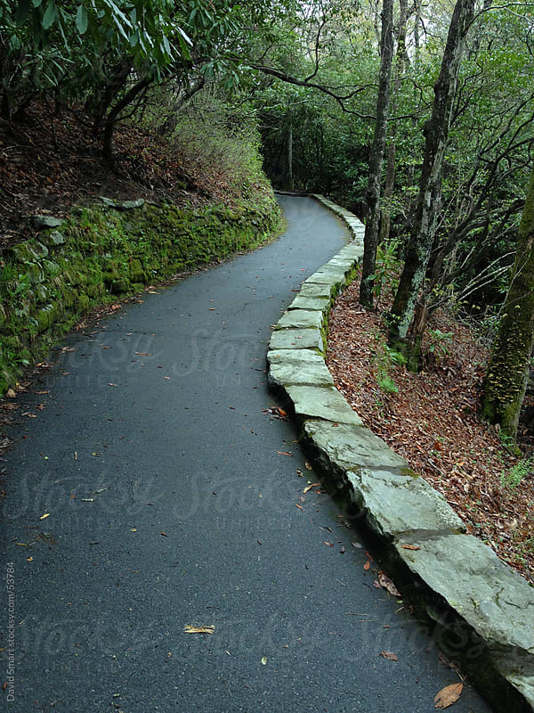 Path in a forest with a damp moss covered rock wall by David Smart for Stocksy United