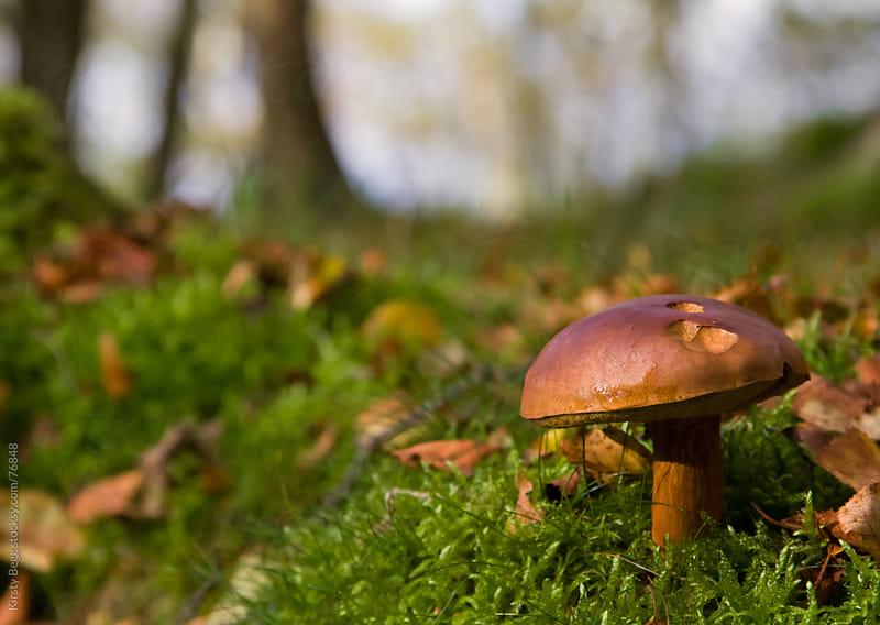 Mushroom on forest floor by Kirsty Begg for Stocksy United