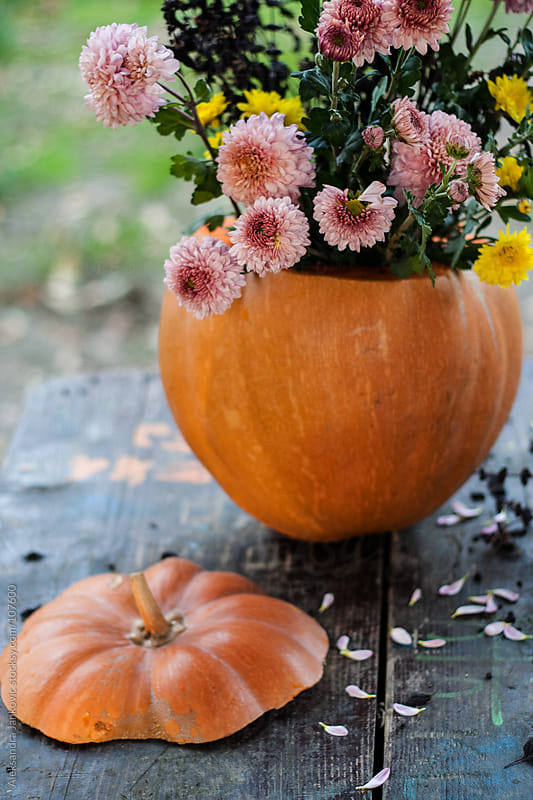 Pumpkin with pink flowers on the table by Aleksandra Jankovic for Stocksy United