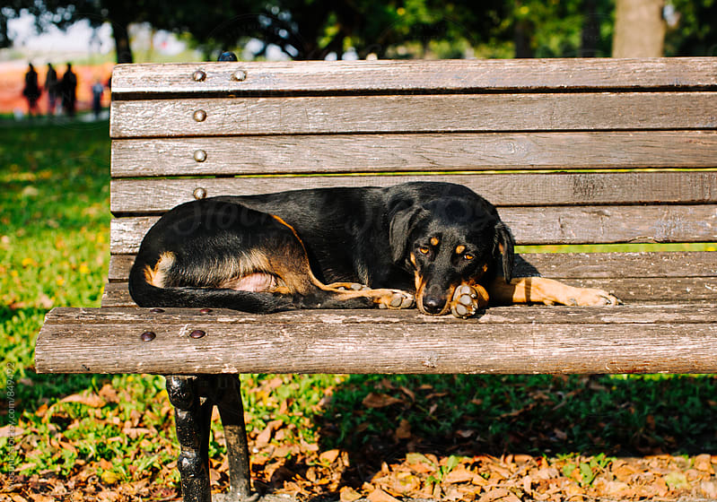 Dog Resting on the Bench by Mosuno for Stocksy United