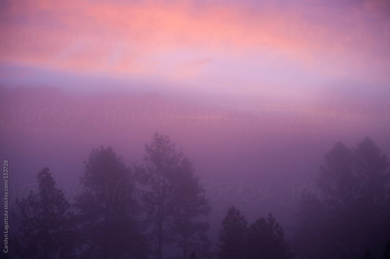 The sun coming up through the fog casting a pink hue  by Carolyn Lagattuta for Stocksy United