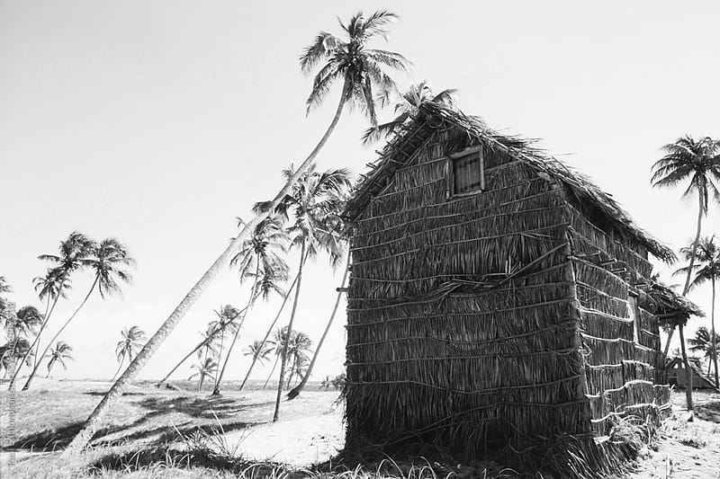 Primitive thatched hut and palm trees on remote beach, near Salvador, Bahia, Brazil  by Paul Edmondson for Stocksy United