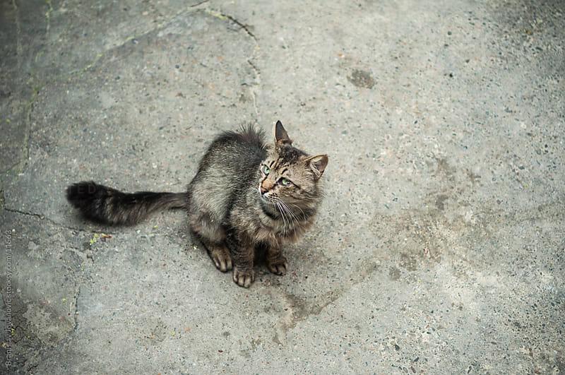 Street cat by Branislav Jovanovic for Stocksy United