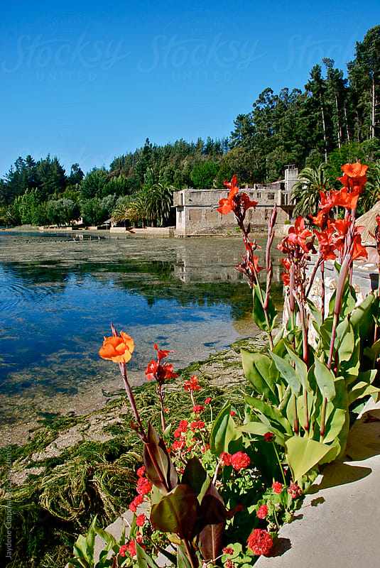 Beautiful flowers by a lake in Chile, South America  by Jaydene Chapman for Stocksy United