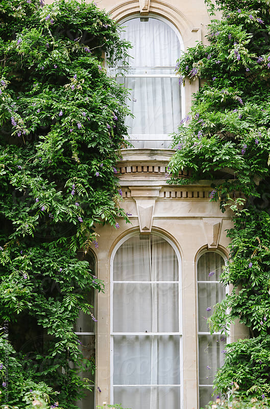 Wisteria growing around arched windows on a building by Suzi Marshall for Stocksy United