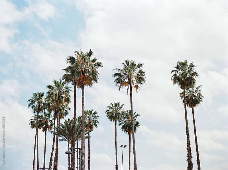 Palm Trees by Yann AUDIC for Stocksy United
