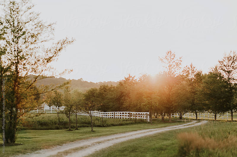 Dirt Path Through Farm at Sunset by Alicia Magnuson Photography for Stocksy United