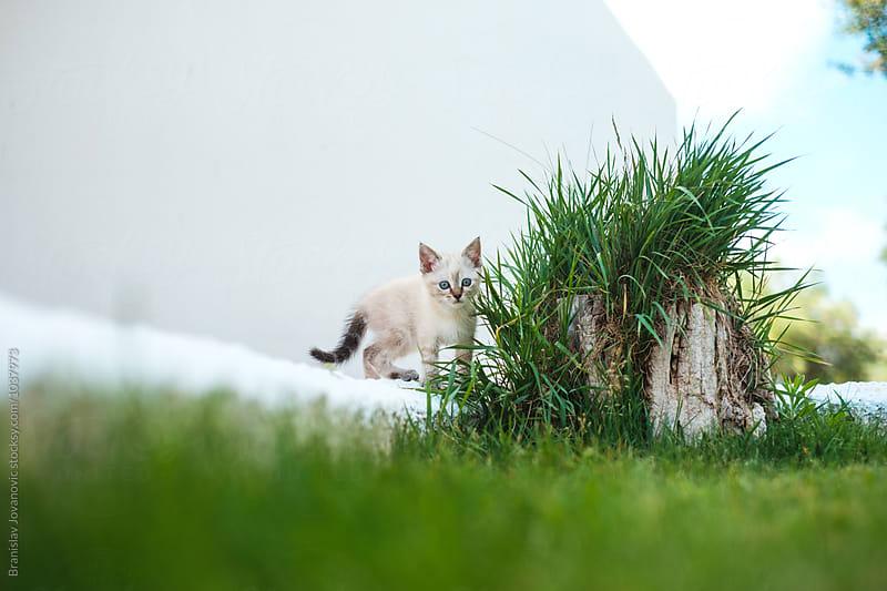 Playful kitty by Branislav Jovanović for Stocksy United