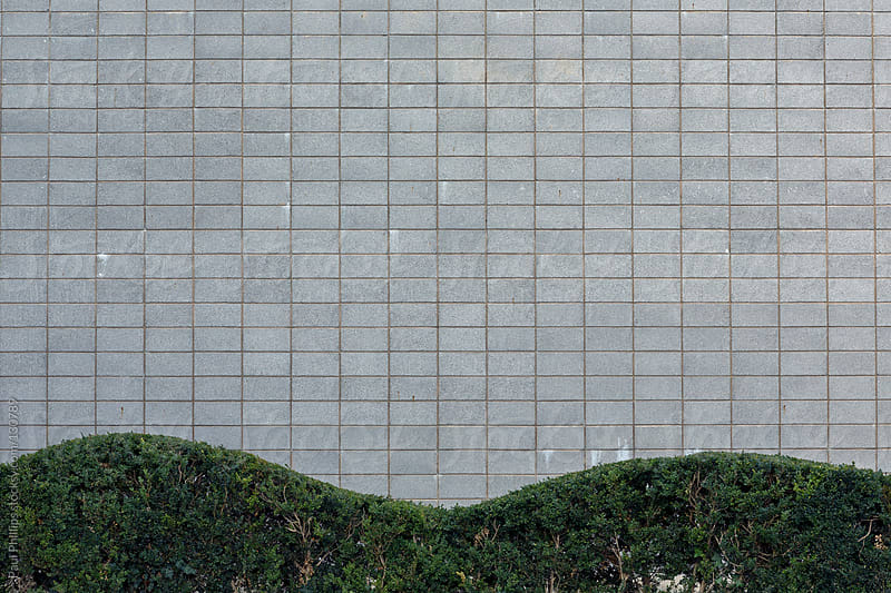 Undulating hedge and uniform blocks of a commercial building by Paul Phillips for Stocksy United
