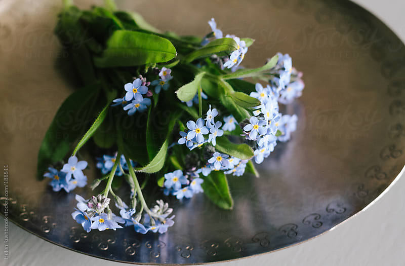 Forget-Me-Nots on a pewter dish by Helen Rushbrook for Stocksy United