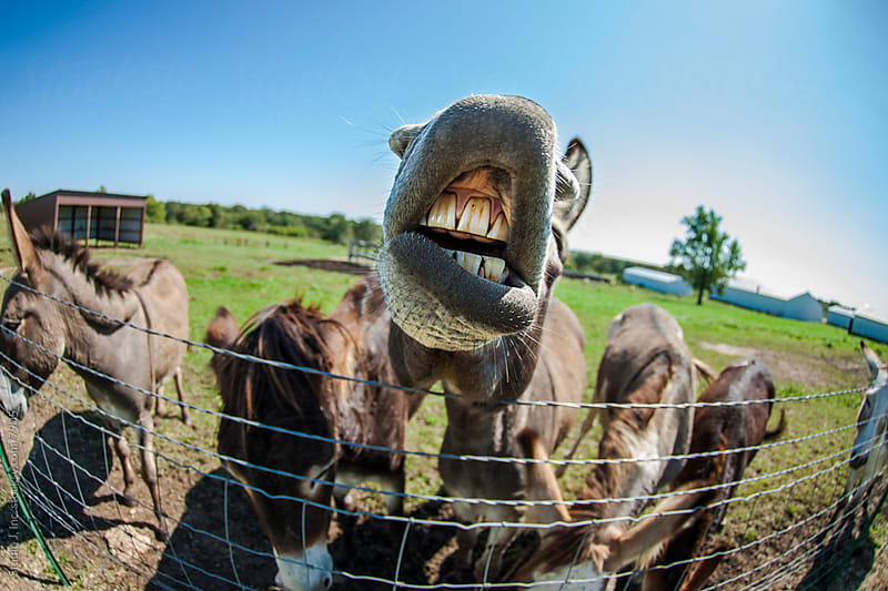 Animal Personalities: Silly Talking Donkey with Whiskers by Jani Bryson for Stocksy United
