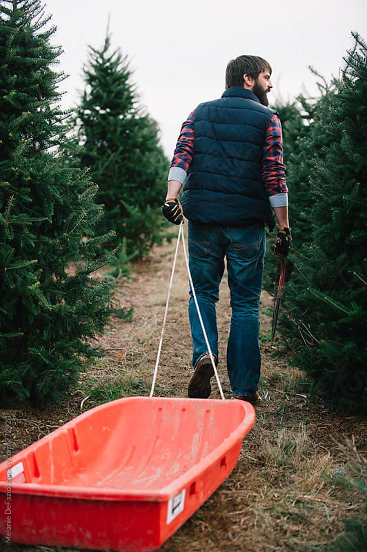 Tree Farm by Melanie DeFazio for Stocksy United