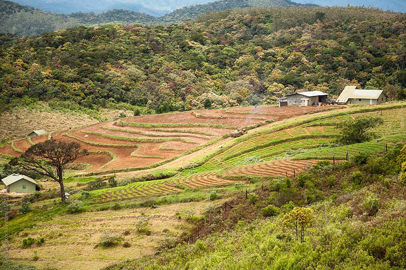 Farm in Nuwara Eliya by Jino Lee for Stocksy United