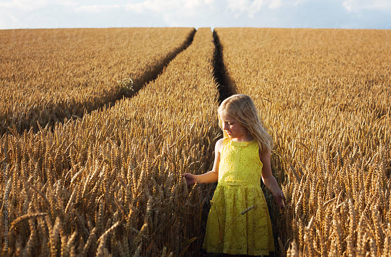 A little girl in a field of ripe wheat by Helen Rushbrook for Stocksy United