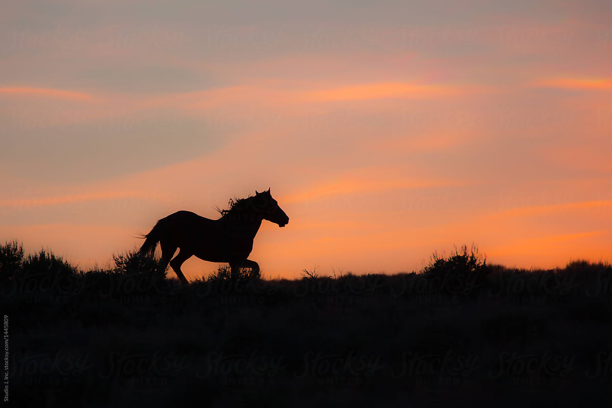 Wild Horse Running At Sunset By Studio J Inc Horse Sunset Stocksy United