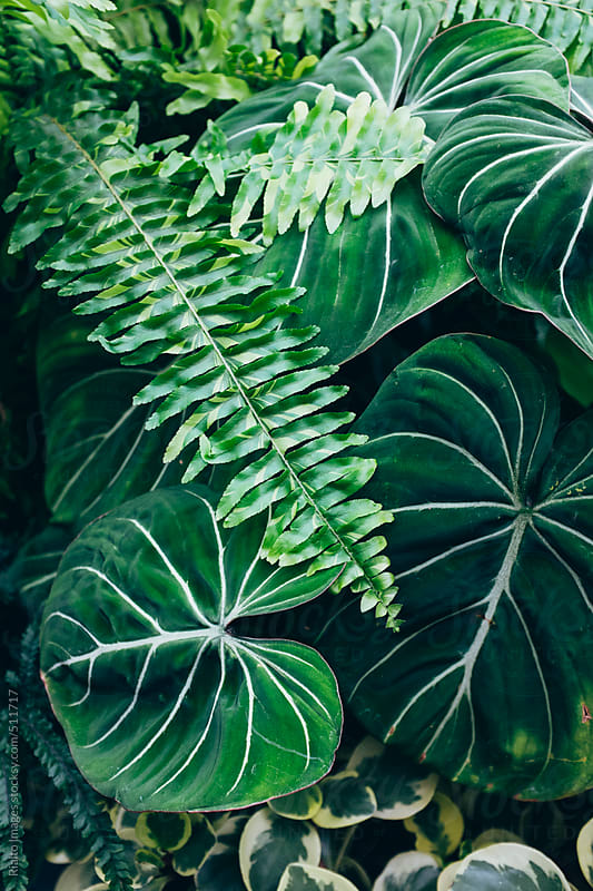 Lush tropical plants growing in greenhouse conservatory by Paul Edmondson for Stocksy United
