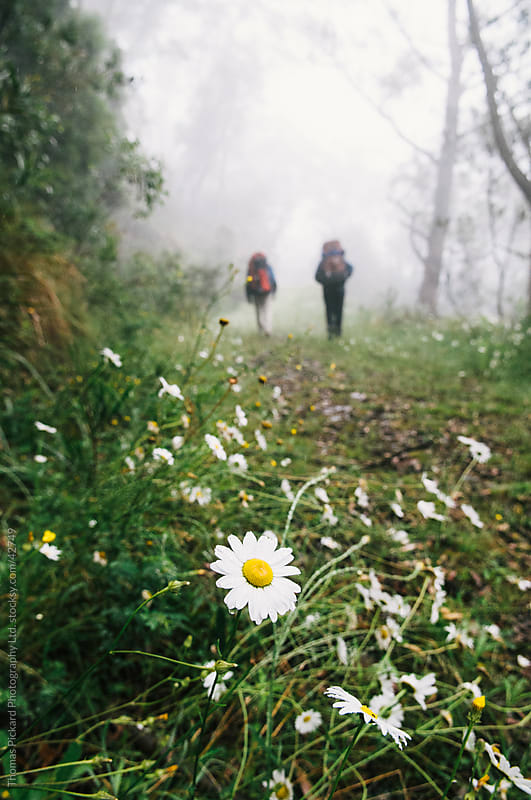 Beautiful flower with two walkers in the background. by Thomas Pickard for Stocksy United