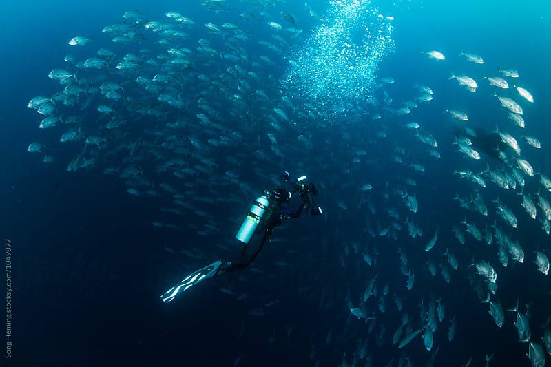 A underwater photographer shooting Manta ray and school of Jack fishes in the blue water of the ocean by Song Heming for Stocksy United