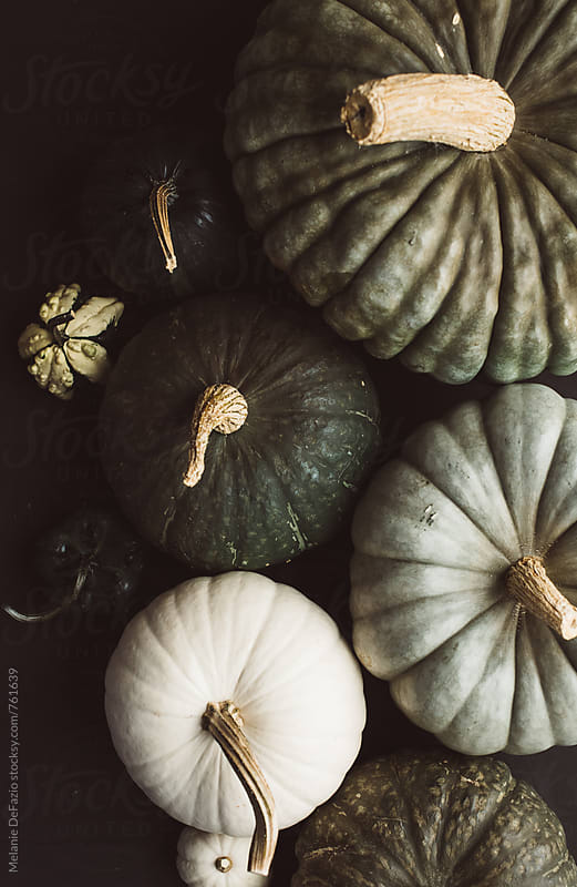 rustic pumpkins by Melanie DeFazio for Stocksy United