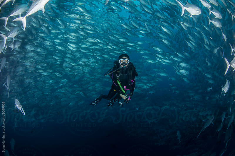 Diving with A school of Jack fishes in the blue water of the ocean by Song Heming for Stocksy United