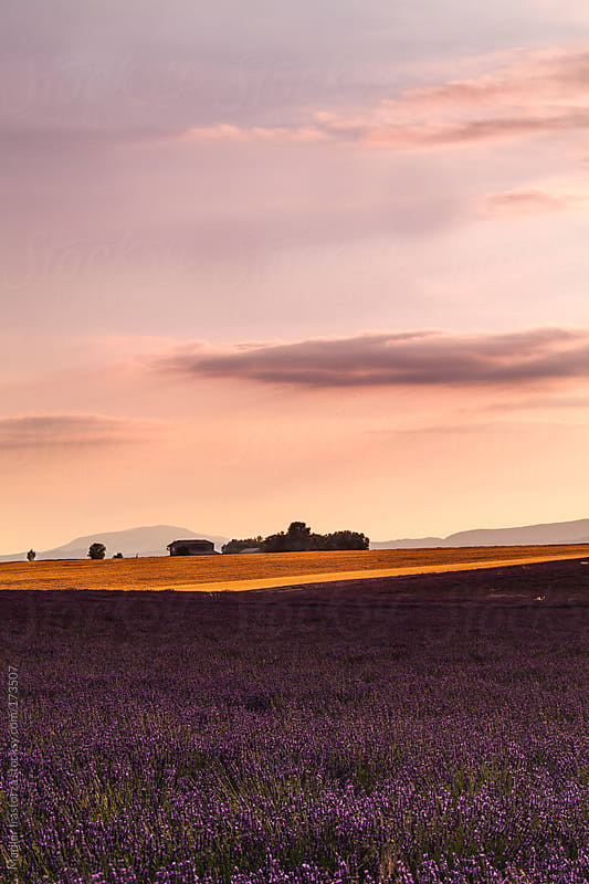 Sunset in Provence by Marilar Irastorza for Stocksy United