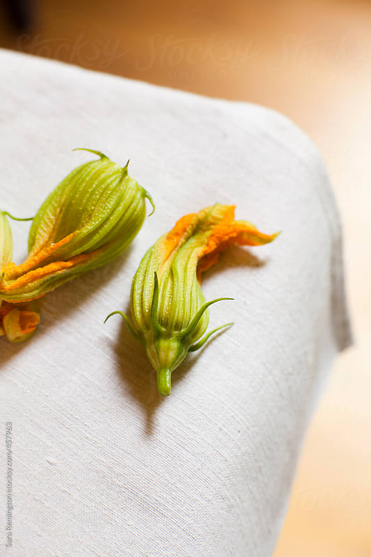 Zucchini Flowers on Table by Sara Remington for Stocksy United