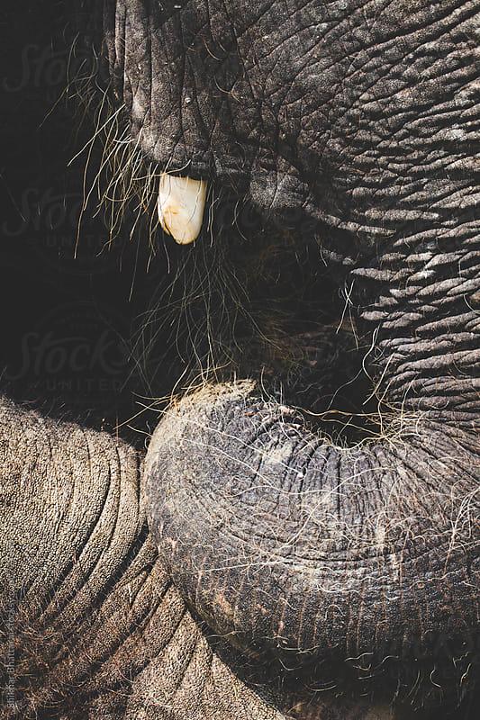 Close up of an elephant. by Shikhar Bhattarai for Stocksy United