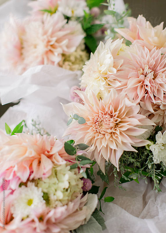 Dahlia Wedding Bouquet by Marta Locklear for Stocksy United