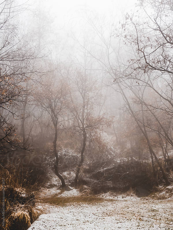 Trees in the fog by Milena Milani for Stocksy United