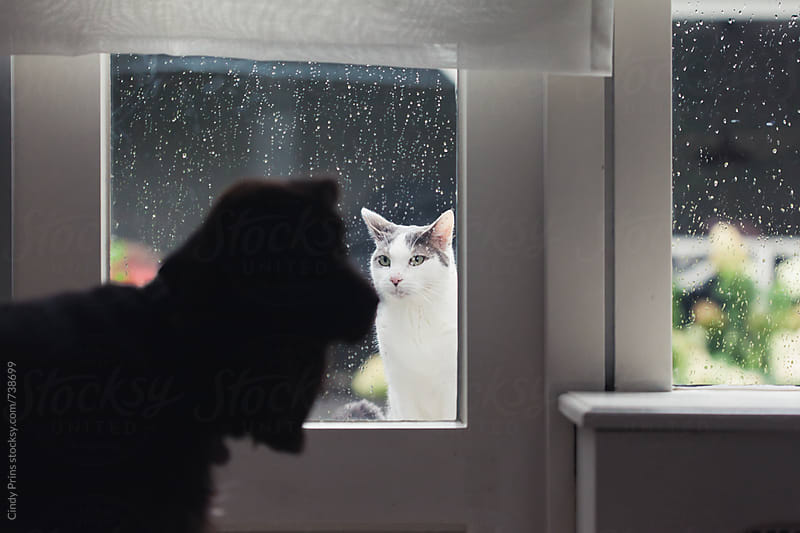 Dog staring at cat standing outside the window in the rain by Cindy Prins for Stocksy United