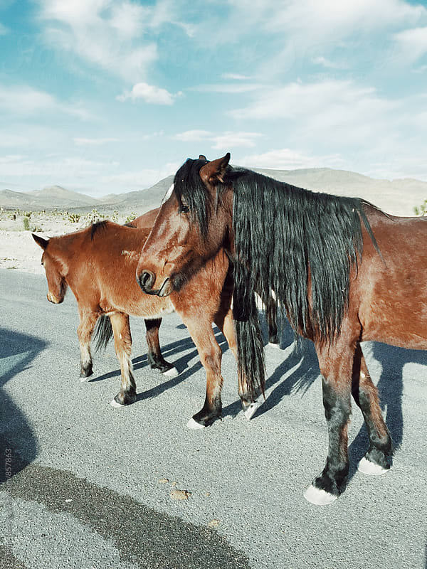 Wild Horses on the Roadside by Kevin Russ for Stocksy United