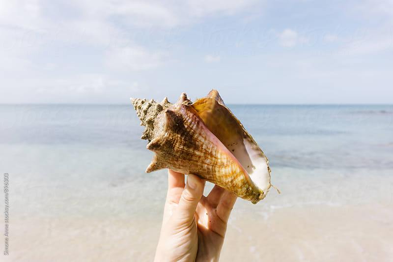 Woman holds pink conch shell by Simone Anne for Stocksy United