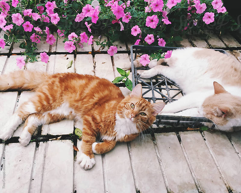 Two sleepy cats in garden center by Tina Crespo for Stocksy United